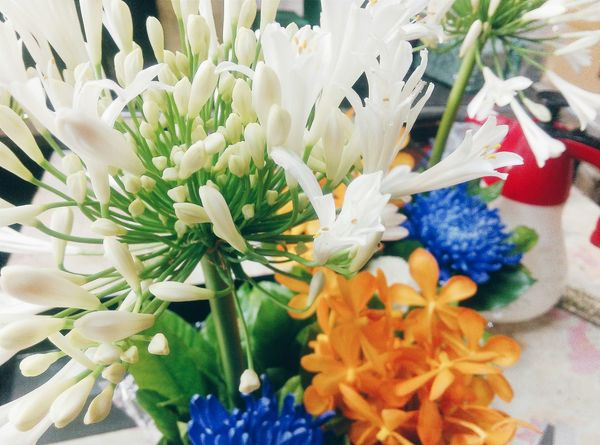 Taking Photos Flowers#nature#hangingout#takingphotos#colors#hello Worldflorafauna F Working