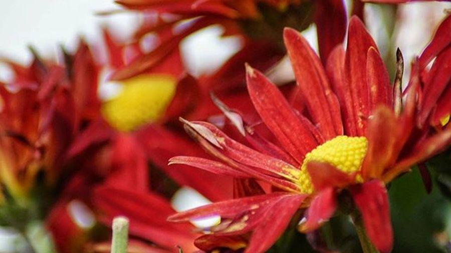 Flower Tamron 70 - 300 macro + Sony a5000 test Sony Sonyphotography Ilce5000 SonyA5000 Tamron