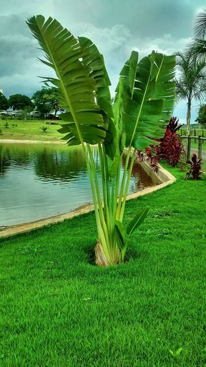 Plant Green Color Water Growth Lake Nature Tree No People Beauty In Nature Day Tranquility Outdoors Leaf Sky Plant Part Freshness Tranquil Scene Scenics - Nature