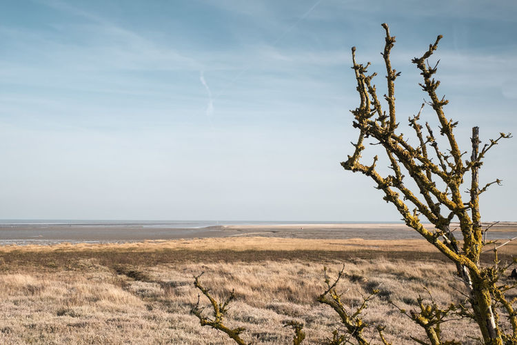 Pegwell Bay Nature Reserve, nr Ramsgate, Kent, UK Sky Beauty In Nature Plant Tranquility Tranquil Scene Landscape No People Day Horizon Over Land Bare Tree Outdoors Sea Tree Remote Climate Nature Land Pegwell Bay Nature Reserve Kent Copyspace Marsh Sea Marsh Marshes