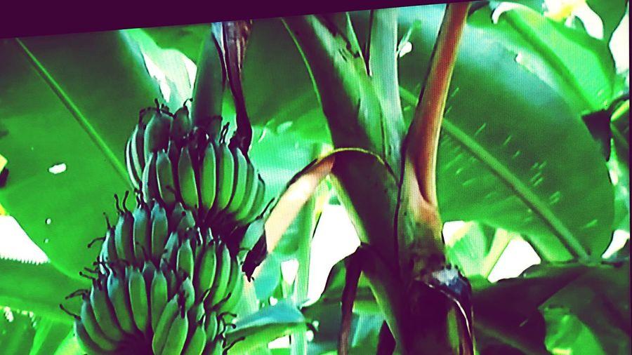 Banana,