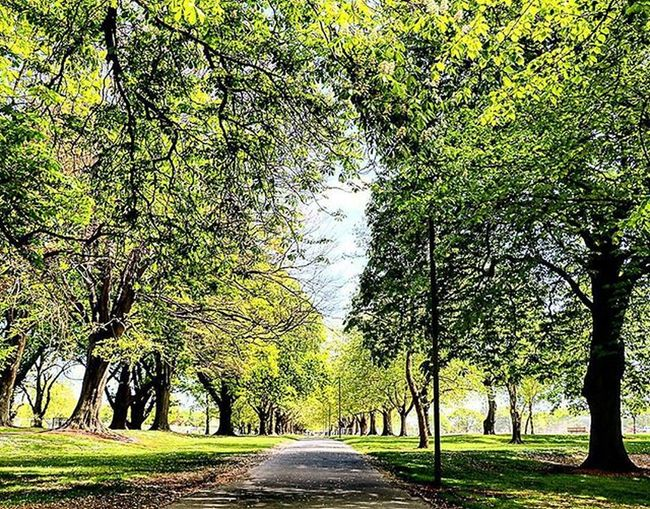Endless trees lies ahead - The multiple award winning botanic garden at Christchurch. Christchurch Nzmustdo Canon Canonphotography Canon760D Trees Ourplanetdaily Christchurchnz Kiwi_photos Enjoythenatural