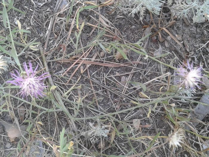 High angle view of purple flowering plants on field