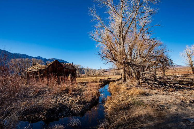 Bare trees and old wooden house on stream in field against clear blue sky