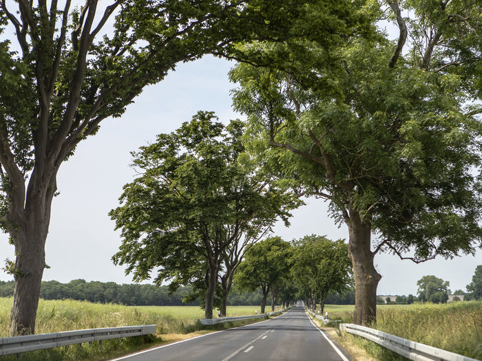 Road by trees in city against sky