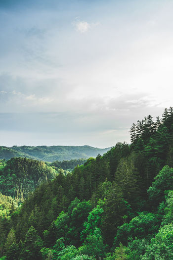 Nature Nature Photography Nature_collection Outdoors No People Blackforest WoodLand Forest Photography Forest Landscape_Collection View Forest Tree Rural Scene Agriculture Flower Head Sky Landscape Cloud - Sky Plant Life Growing In Bloom Blooming The Great Outdoors - 2018 EyeEm Awards