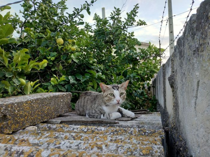 Cat in relax