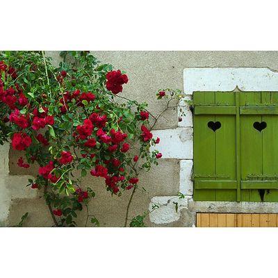 Des cœurs et des roses... Sancerre Igerscher Architecturerurale Roses coeurs grainedenature vert volets