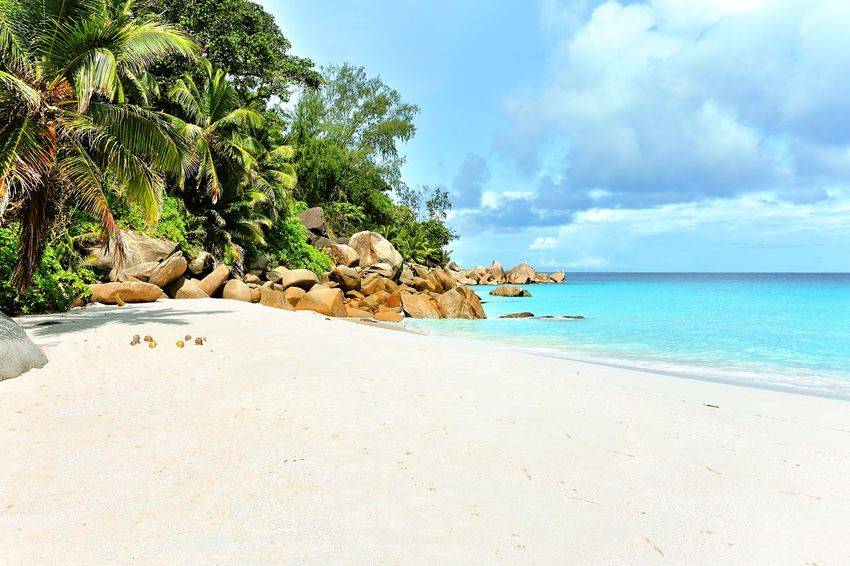 Beach Anse Georgette on Praslin, Seychelles Beach Blue Calm Coastline Exotic Island Lined Lone Lonesome Luxury Majestic Nature No People Outdoors Palm Sand Sea Site Sunny Tranquility Travel Tree Tree Tropical Water