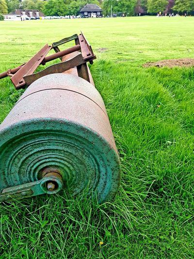 Tis the season Cricket Field Grasses Colurs Of Nature Greenery Gardenn Tree Field Grass Green Color