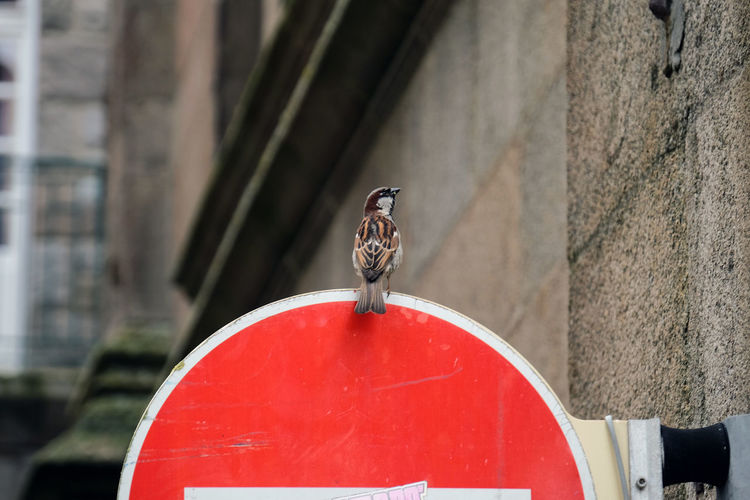 Bird perching on red no entry sign by wall