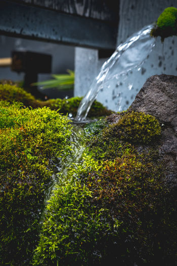 Close-up of water flowing in moss