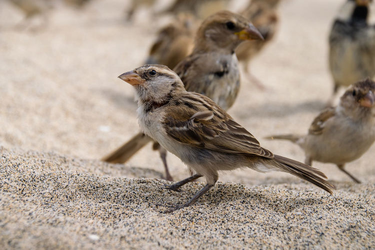 Animal Themes Animal Wildlife Animals In The Wild Bird Close-up Day Nature No People Outdoors Sparrow