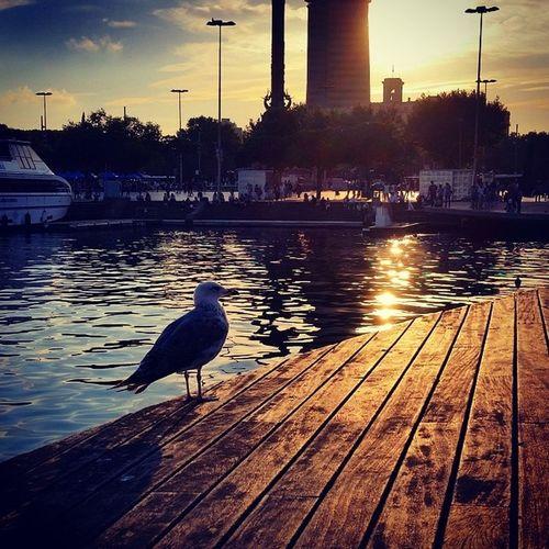 La gavina filòsofa. Bcn Barcelona Seagule Sun Port