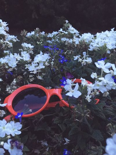 The OO Mission Red Flowers :) Glasses