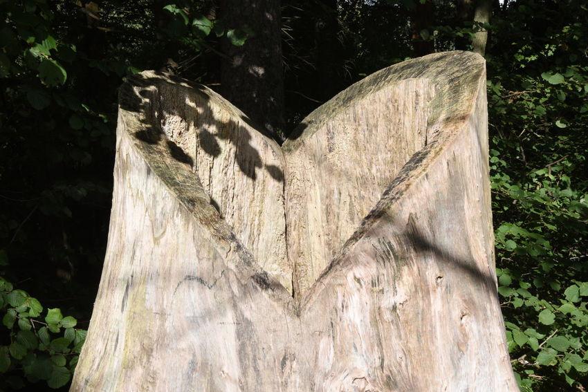 Baumstumpf Herz ❤ Baum Heart ❤ Love Natur Nature Tree Tree Trunk