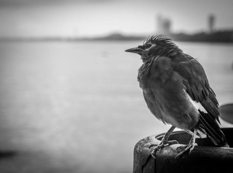 Animal Wildlife Beach Bird Nature One Animal Outdoors Sea Water Blackandwhite Sea Landscape