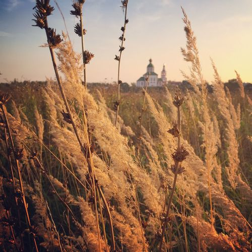 Суздаль, Russia. EyeAmNewHere Old Russia Classic Russia Summer Old Russia Old Town Nature Sunset Church EyeEm Selects Sky Plant Nature Growth Landscape No People Tranquility Beauty In Nature Field Scenics - Nature EyeEmNewHere EyeEmNewHere EyeEmNewHere