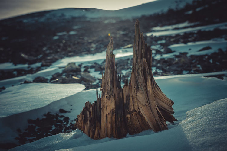 Close-up of tree stump during winter