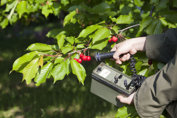 Cropped hand of person holding geiger counter by cherries on tree