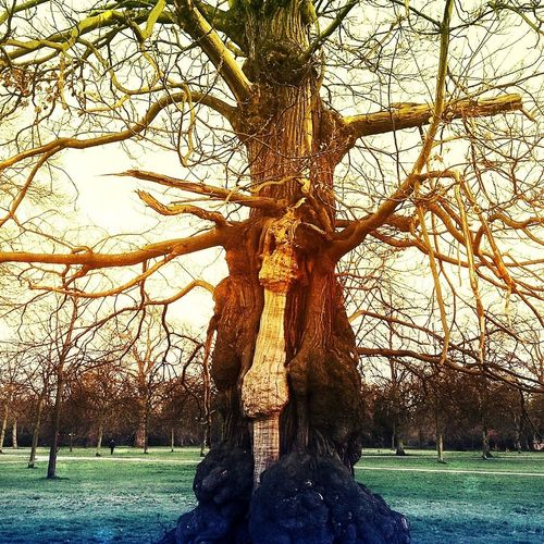 Tree Branches Park Life Standing Solo