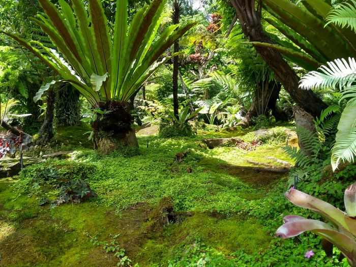 Palm trees and plants growing on land