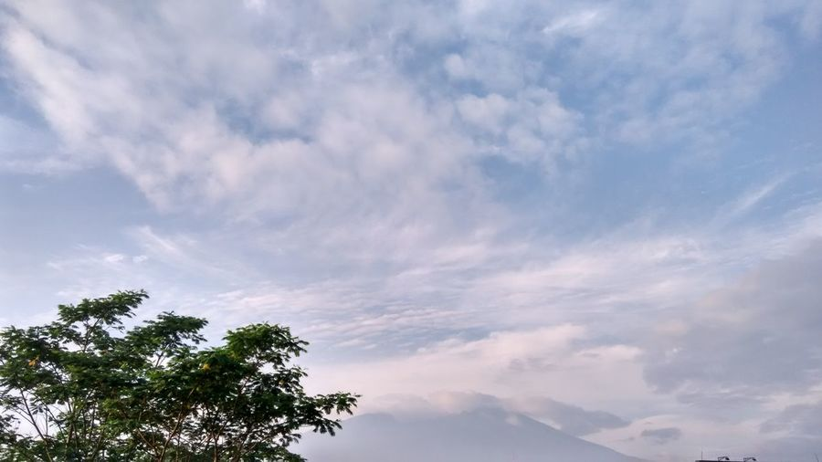 Pale Blue Sky Pale Blue Mountain Tone In Tone Pale Blue Light Tree Nature Cloud - Sky Tranquility No People Sky Outdoors Beauty In Nature Treetop Day Nature Beauty In Nature Earth And Sky Places And Spaces Places Around The World Good Morning Rural Scenes Rural Exploration No Bird In Sight Moment Of Silence