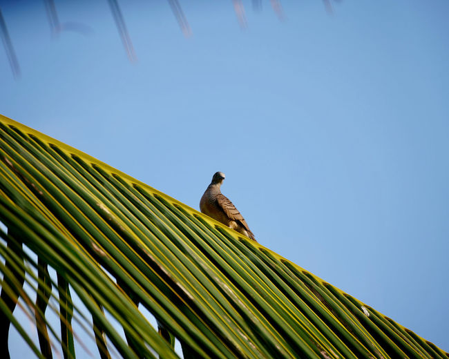 Low angle view of bird perching on palm tree against sky