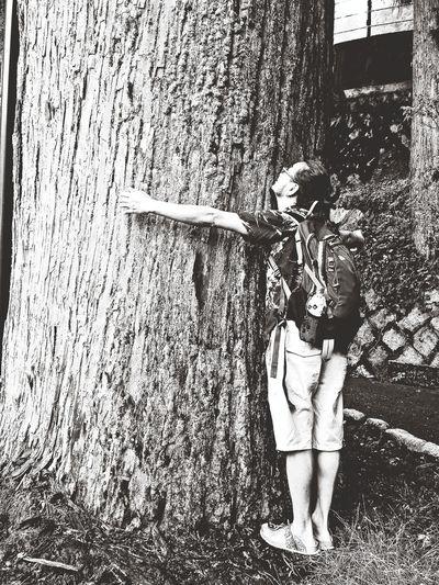 huge tree :P