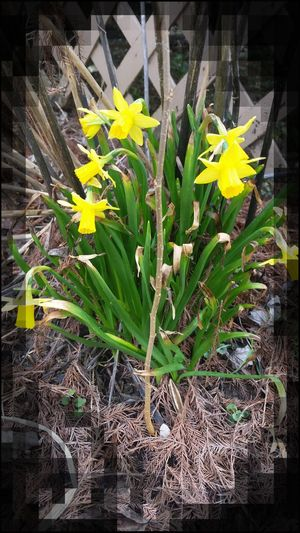 First Blooms Of The Year Naturelovers Check This Out Flowers Outdoors
