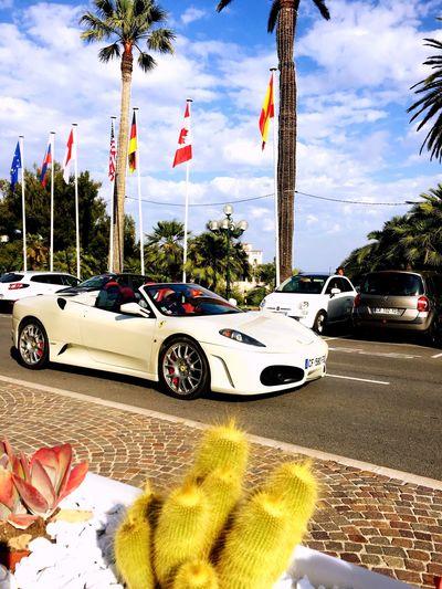 Luxurylifestyle  Car Palm Tree Coctail Ferarri Monaco Luxurylife Luxury Car