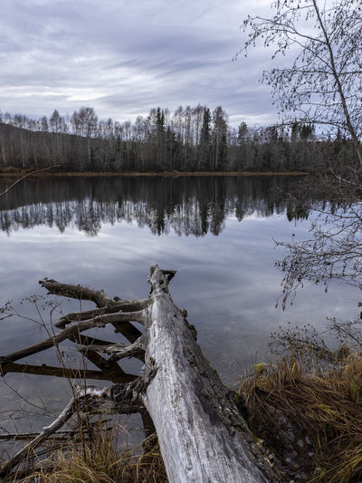 Water Tree Lake Plant Tranquility Wood - Material Sky Beauty In Nature Scenics - Nature Cloud - Sky Tranquil Scene Nature No People Non-urban Scene Reflection Day Timber Wood Cold Temperature Driftwood Outdoors Dead Plant Olympus OM-D E-M10 Mark II
