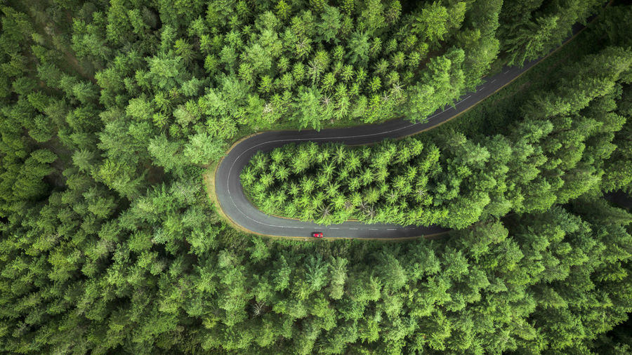 High angle view of plants on road amidst trees