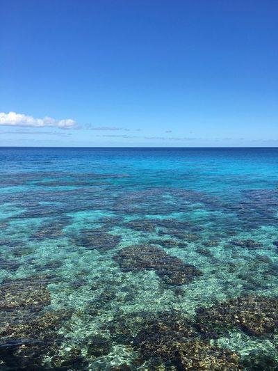 Island Coral