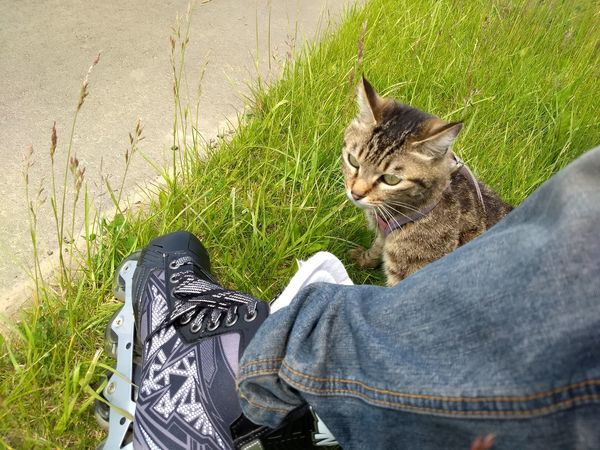 Outdoors Cat♡ Cat Animal Inline Skate
