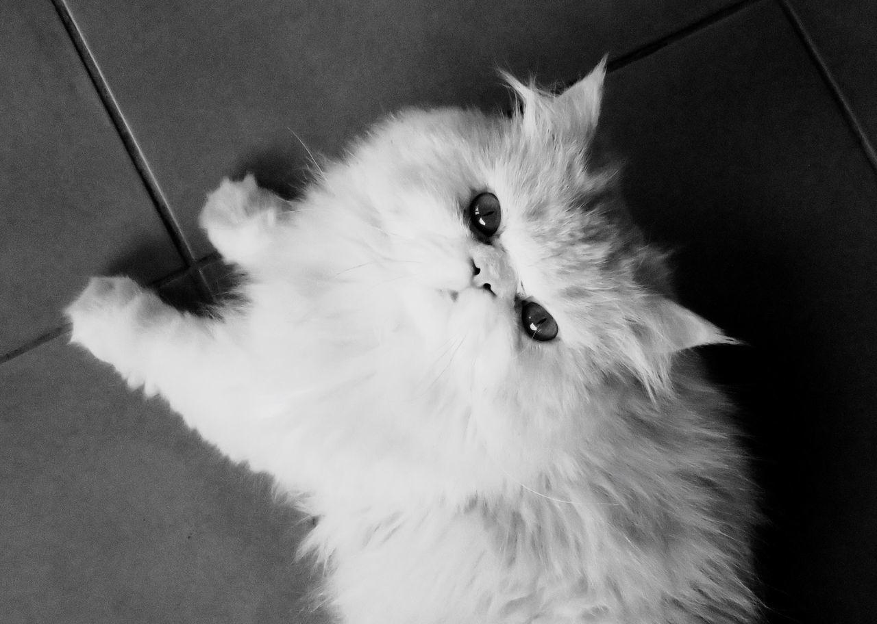CLOSE-UP PORTRAIT OF CAT ON BLANKET