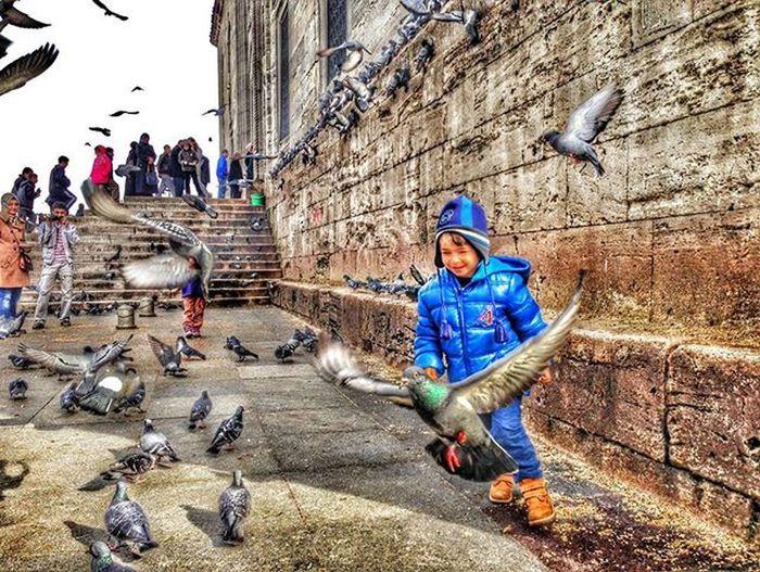 Mutluluk... // Happiness.. 👦🐦 . . Istanbuldayasam Anlatistanbul Instabird Vscokadraj Istanbulpage Love Istanbullovers Istanbullife Istanbuldayasam Picslover Istanbul_hdr Istimebul Ig_istanbulcity Istanbulda1yer Sehir_istanbul Birds Istanbuldabirgun Istanbulinsani Gencgezginler Ig_istanbul Birdsofinstagram Kuslar Cokgezenlerklubu VSCO Ig_fotograf eminonu fotografkitabı gezitutkusu trseyyah
