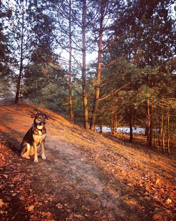 Beautiful sunset with my girl Malou🐾 Pets Dog Tree Nature Outdoors Beauty In Nature Winter Hikingadventures Rescuedog Hike Adventure Freedom Traveling Nature Photography Sunset Rescue Puppy