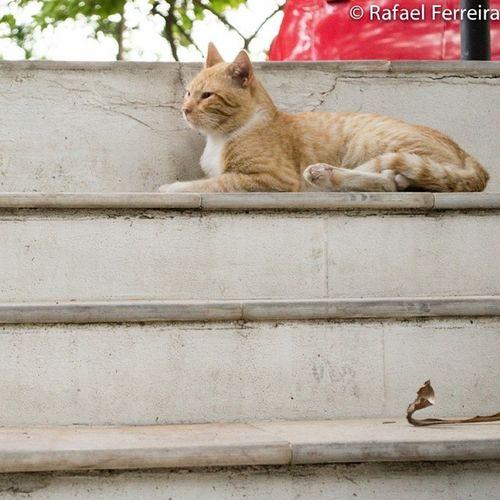 Estou virando uma espécie de especialista em fotografar gatos haha Nikon D3100 Cat