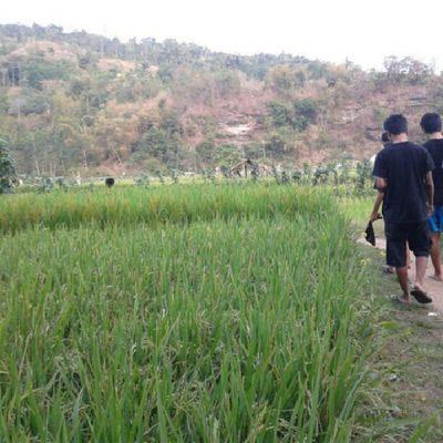 go to rice field Instamudik
