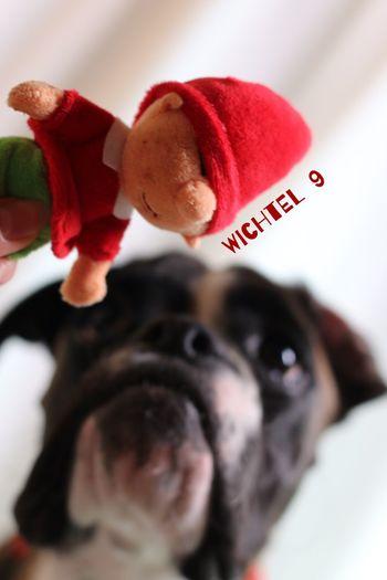Türchen 9 Juno's Adventskalender Juno's World For My Friends That Connect I Love My Dog