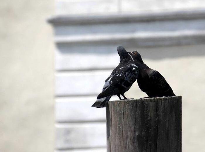 Turteltäubchen 🐦♥️ Love Birds Love Lovebirds Birds Bird Bird Photography Dove Doves Dove Love Tauben Taubenfotografie Vogel Animals