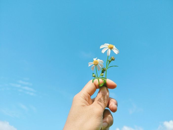 Close-up of person holding flower against sky