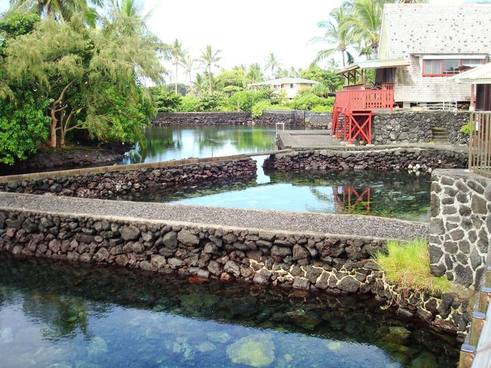 Backyard Water Built Structure Architecture Beauty In Nature Hot Spring Lava Volcano Lake Pond Pool Poolside Swimming Pool Backyard Backyardphotography Hawaii Big Island Hawaii Big Island Tranquil Scene Calm Calm Water Community Neighborhood