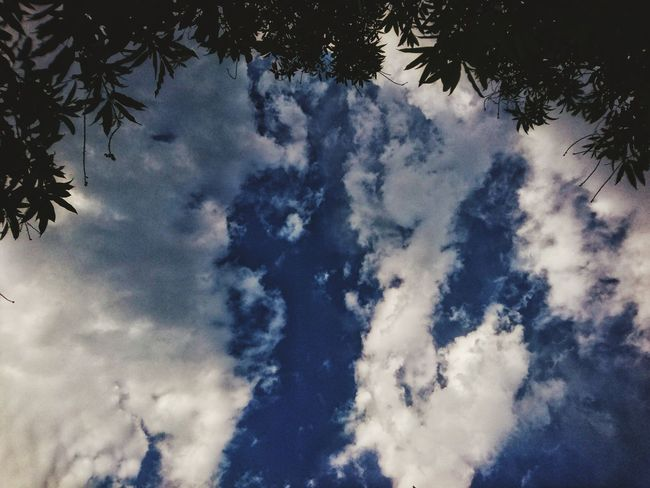 Tree Sky Low Angle View Nature No People Growth Tranquility Beauty In Nature Outdoors Branch Day XperiaZ5 Cloud Formations Vijayawada Blue Cloud - Sky India Sony Xperia XPERIA Xperiaphotography Z5 Photography Z5