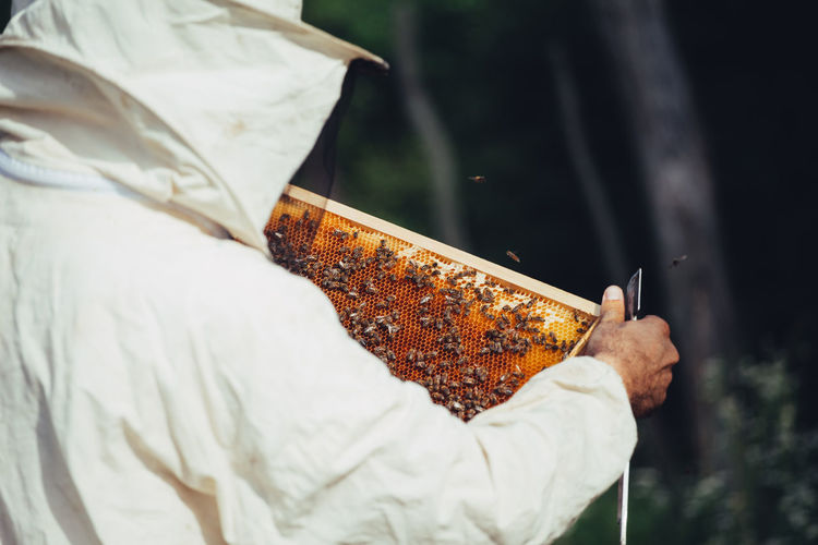 Close-up of beekeeper examining beehive