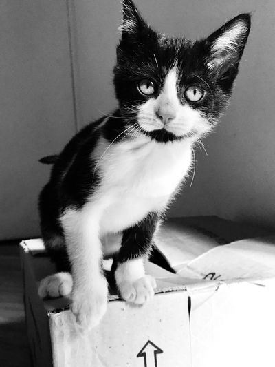 Cartoon cat Blackandwhite Photography Blackandwhite Animal Themes Domestic Animals Mammal Animal Domestic One Animal Pets Domestic Cat Cat Feline Vertebrate No People Indoors  Sitting Home Interior Whisker Wall - Building Feature Portrait Close-up Looking At Camera