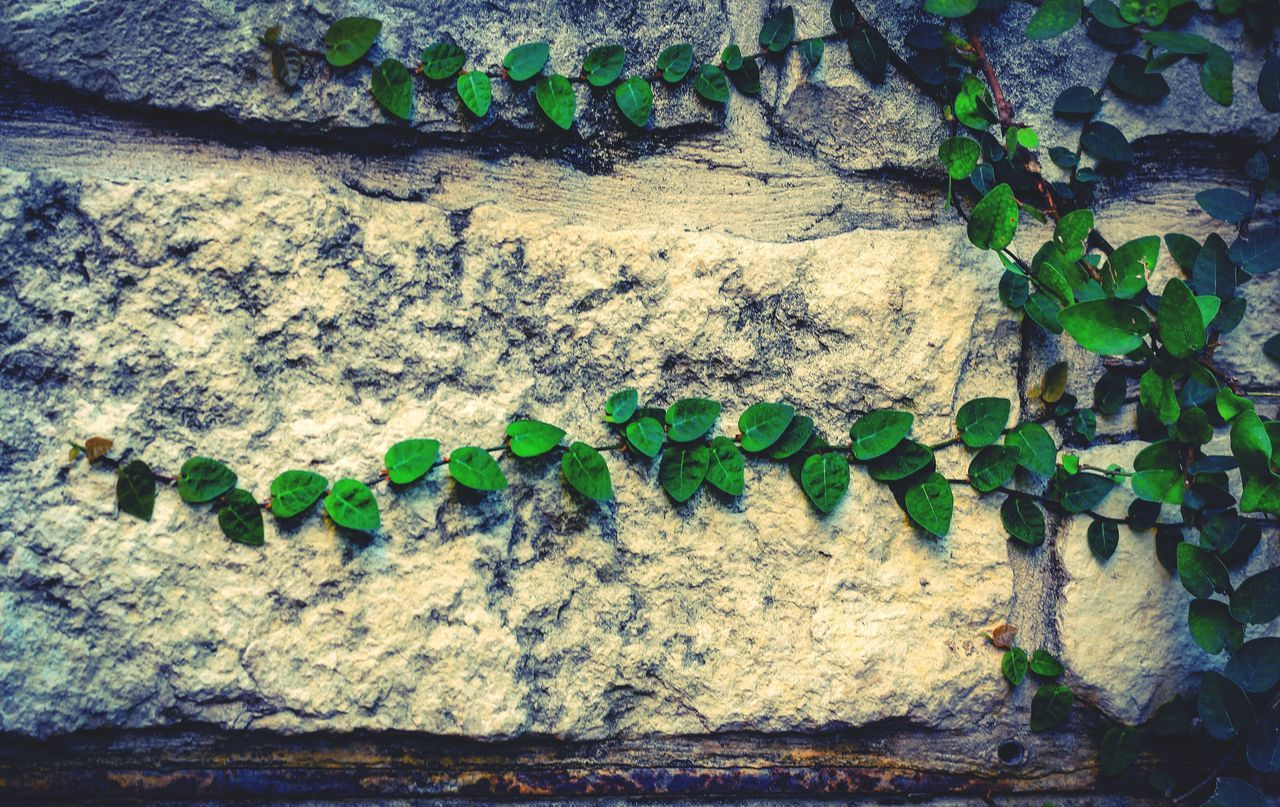 leaf, plant, no people, green color, day, growth, close-up, outdoors, freshness, nature