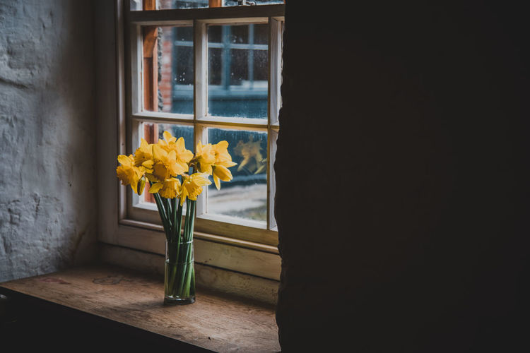 Daffodils in vase on window sill