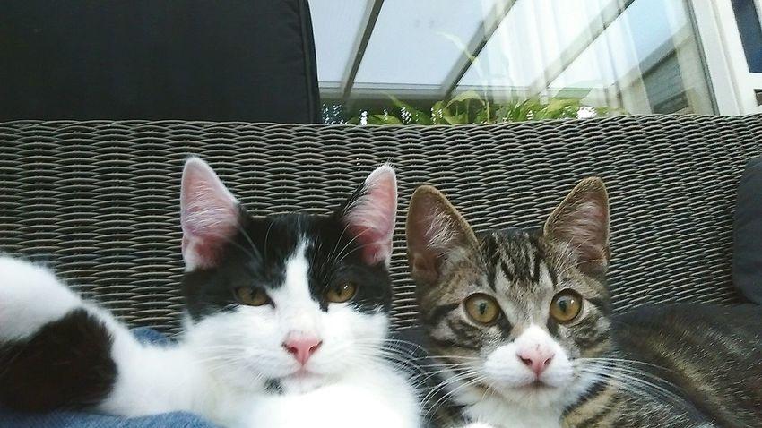 Cat selfie. Cats Selfportrait Selfies